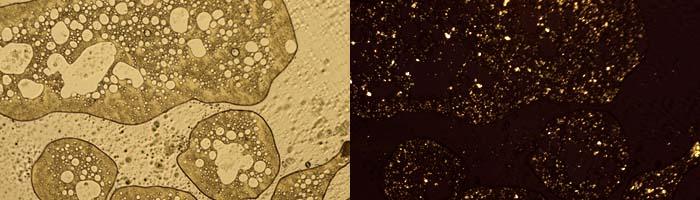 Асфальтены и парафины в скрещенных поляроидах